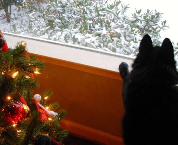 Pasha watching the snow fall at Christmas time, Alexandria, Virginia 2010