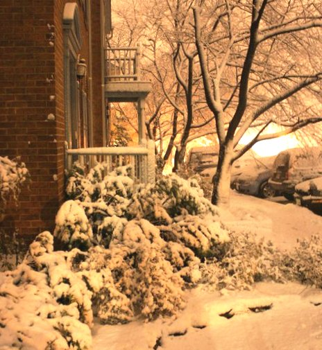 Scene from our porch in Alexandria 2011