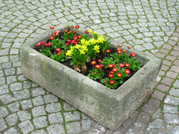 An island of beauty in a cobblestone square, Germany 2007