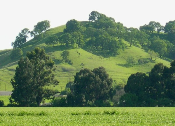 Green hills near our northern California home, 2003