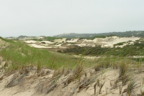 Cape Cod National Seashore near Provincetown, Massachusetts, May 2009
