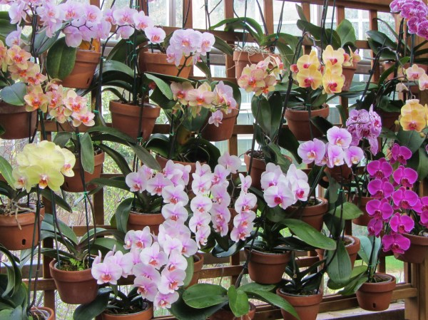 Orchids bloom beautifully at the Atlanta Botanical Garden, March 2012
