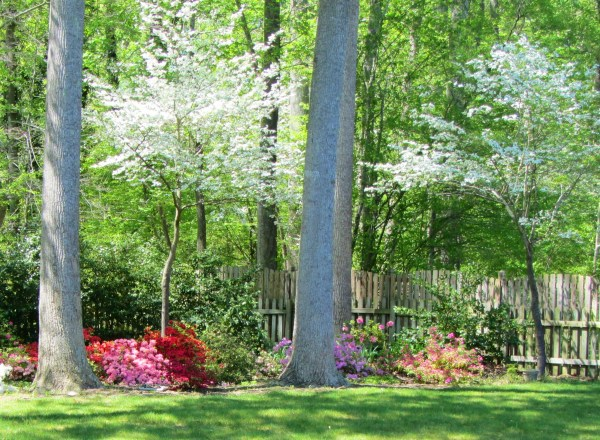 A corner of our York back yard on Easter 2012