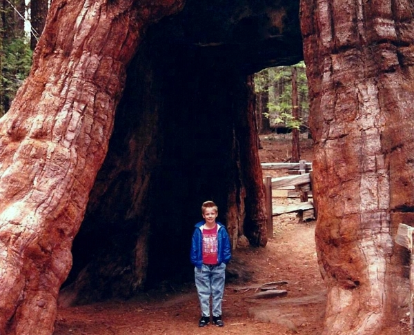 Drew inside a redwood turned gateway in Mariposa Grove, Yosemite, 1992