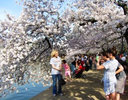 One of hundreds of photos being taken at that very moment, all around the Tidal Basin.  April 2013