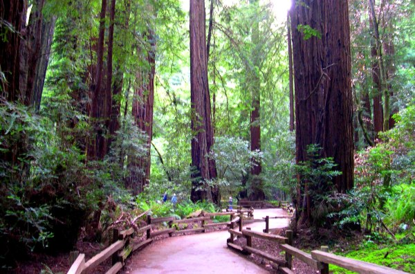 Another unsuccessful attempt to capture the indescribable: Muir Woods, May 2003