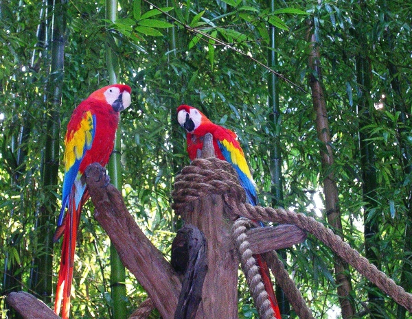I photographed these parrots at Disney World, where they tactfully refrained from speaking.  August 2003