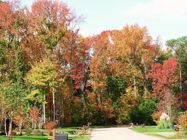 This photo was taken just down the street from our York home during autumn, 2008.