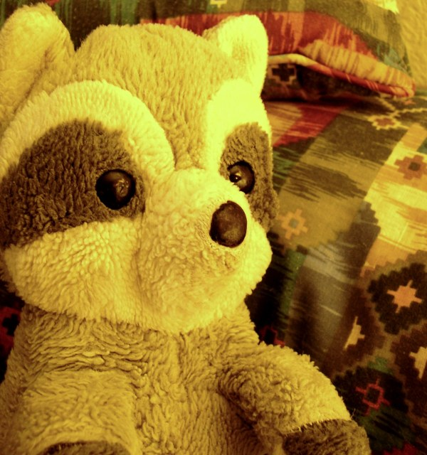 This threadbare little raccoon has seen the world.   Vacaville, CA, en route back to Tennessee, August 2003