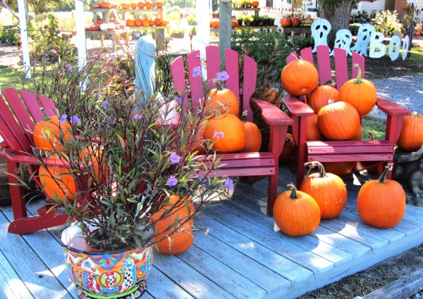 Pumpkins were plentiful at this shop near the Outer Banks, North Carolina, September 2013