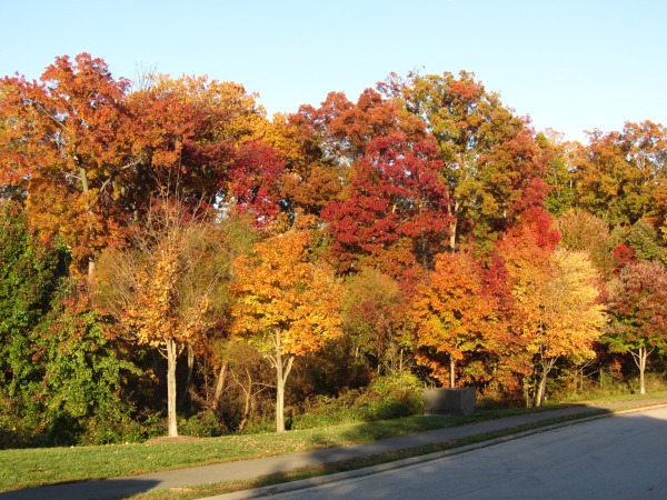 I snapped this photo just behind our townhome in our Alexandria neighborhood, November 2011.