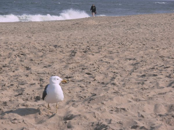 A gull and a person, enjoying solitude at the beach. Dam Neck, Virginia, April 2010