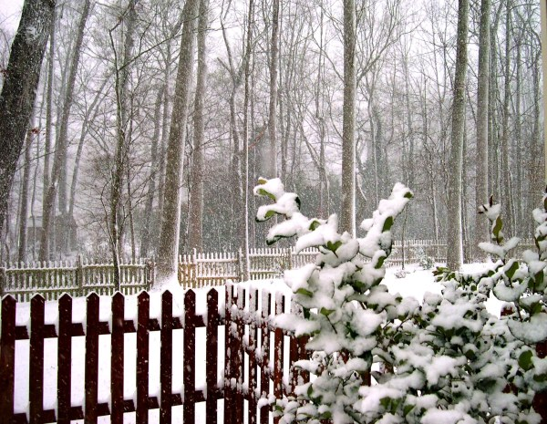 I took this photo of our backyard on Christmas evening, 2004.