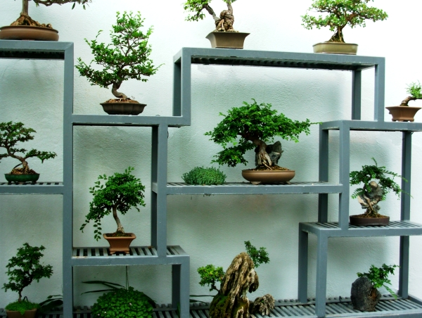 Bonsai trees at the Montréal Botanical Garden, May 2009