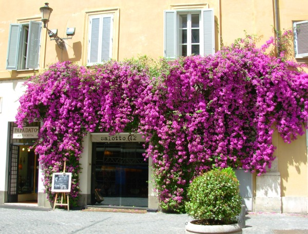 This shop in Rome gave me a bit of beauty to capture and pass along!  May 2008