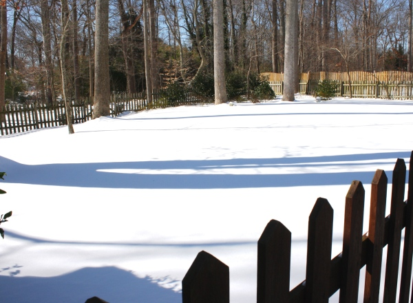 Our York backyard, still and beautiful after a snowfall, January 2010.