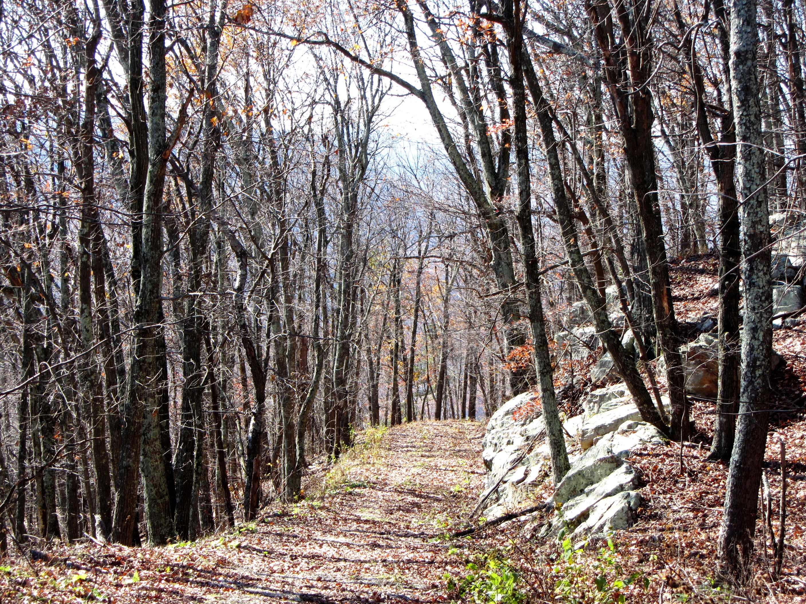 An unknown path need not be fearful.  The Blue Ridge Mountains, November 2011
