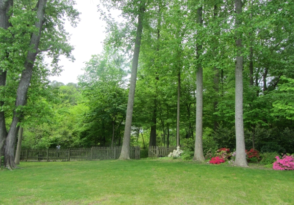 One week before surgery, Jeff prunes away at the overgrowth in our wooded lot, May 2013.