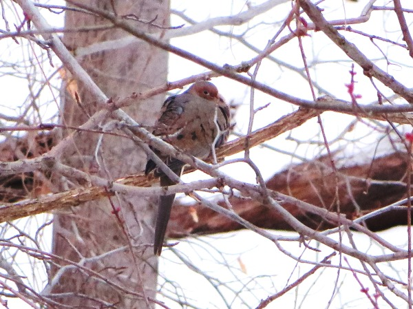 I almost missed this cute visitor to our Alexandria back yard, March 2014
