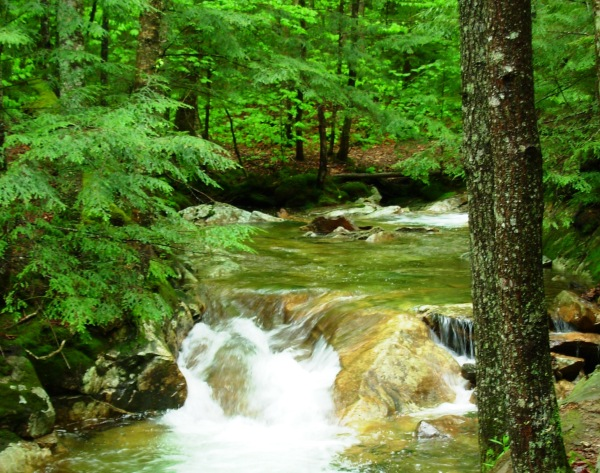 Franconia Notch State Park, a place of refreshing solitude.  May 2009