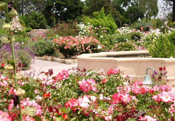 Whoever tended this garden brightened my day, and probably their own, too. Mission San Juan Capistrano, California, July 2004