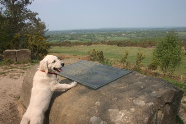 Milne and Shepard are remembered at Ashdown Forest, where animals and children still play. Photo by David Brooker via Wikimedia Commons [CC-BY-SA-2.0 (http://creativecommons.org/licenses/by-sa/2.0)]