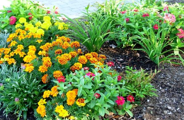 September flowers, Bar Harbor, 2007