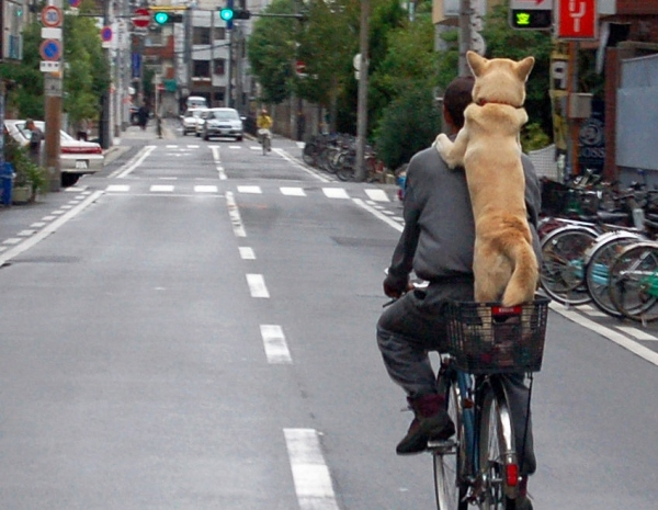 A dog riding the bicycle by Takato Marui, Osaka, Japan. Via Wikimedia Commons, Licensed under CCA 2.0