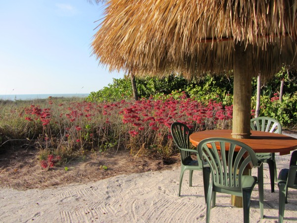 Welcome to winter on Captiva Island! I took this photo in January, 2012, but we're going there NOW.