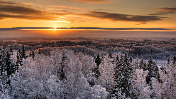 Like the sun in the coldest winter, the dream shines on. Karula National Park, Estonia by Amadvr via Wikimedia Commons