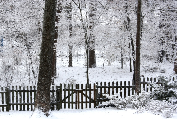 Our wooded lot feels enchanted in winter.  February 2010