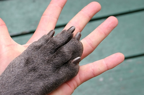 Living Hand to Paw by Bruce from San Francisco, CC BY 2.0 via Wikimedia Commons