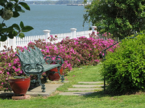 Yorktown garden stroll, Darla's neighbor April 2015