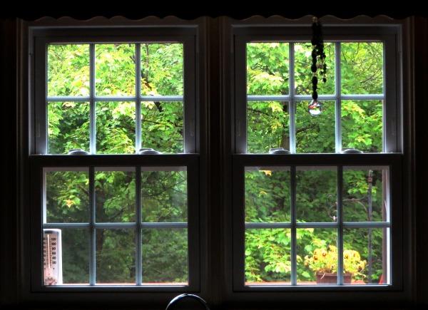 The trees greet us each morning.  Alexandria, June 2015