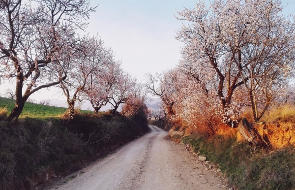 The road we travel is unknown to us, but it's a beautiful and compelling journey. Almendros en flor (cropped) by Gregorio Puga Bailón, CC by 2.0 via Flickr