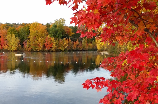 Susan is giving us a quick getaway to New England, where the colors are a joy to behold. Photo sent by Susan, taken in New Hampshire, October 2015