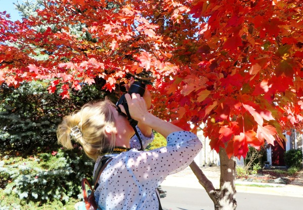 A brilliant addition to my pictures of people taking pictures! Susan photographs a tree on our walk to lunch, November 2015.