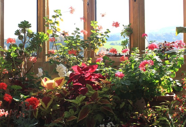 House plants in the conservatory at Dunster Castle, Somerset. Photo by Ian Turk, CC BY-NC-ND 2.0, via Compfight.com