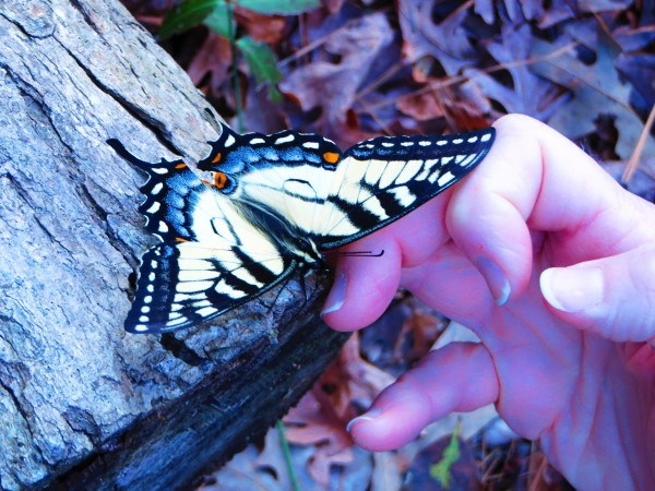 Lending a hand to the butterfly March 2016