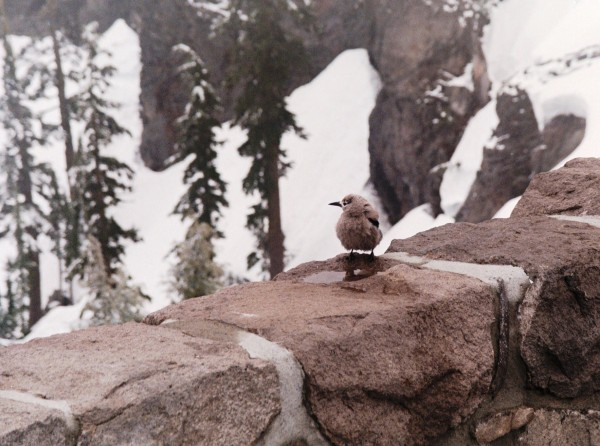 We don't need to be big or strong or colorful to be beautiful. I photographed this pretty little bird at Crater Lake, Oregon, June 2000.