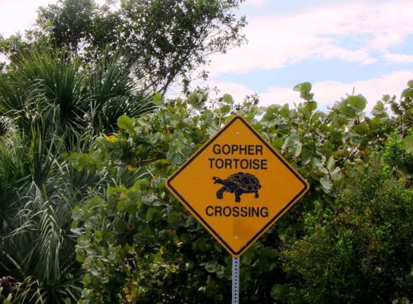 Take a lesson from the Captiva tortoise, who lives on island time. January 2013