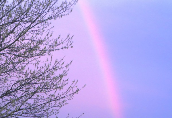 I photographed this rainbow on the evening of April 4, 2016.